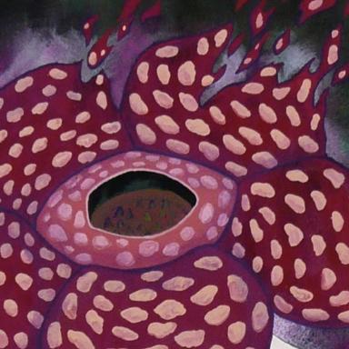 ラフレシア / Rafflesiaの画像